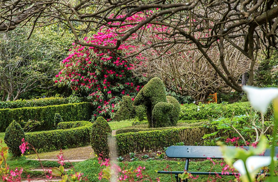 Around The Whole World, Madeira Is Known Not Only For Its Natural Beauty,  But Also For Its Gardens And Parks, Meticulously Cared For As If On  Exhibition, ...